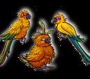 Sun Parakeet