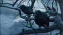 Cuervo-de-tres-ojos1.png
