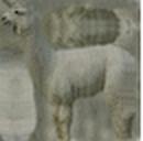 Alpaca White.png